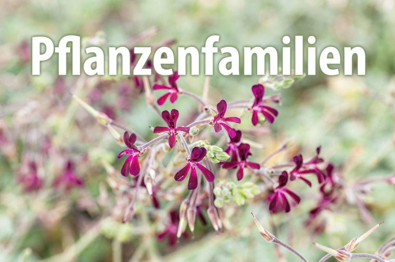 Pflanzenfamilien von Nutzpflanzen