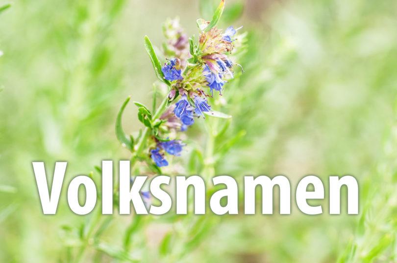 Volksnamen von Nutzpflanzen