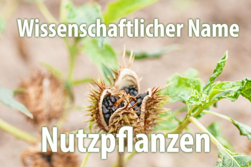 Wissenschaftlicher Name von Nutzpflanzen